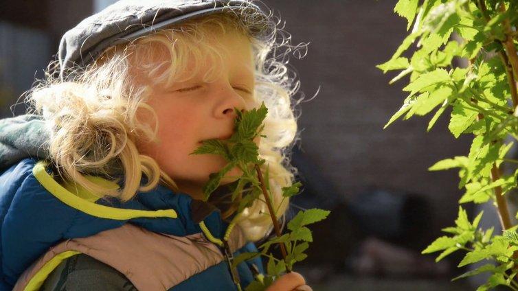Koninklijke VHG | Commercial Groen is dichterbij dan je denkt